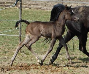 The first foal of Ali Lane