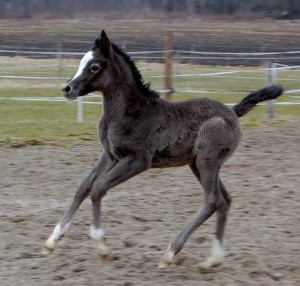 We start with a filly :-)